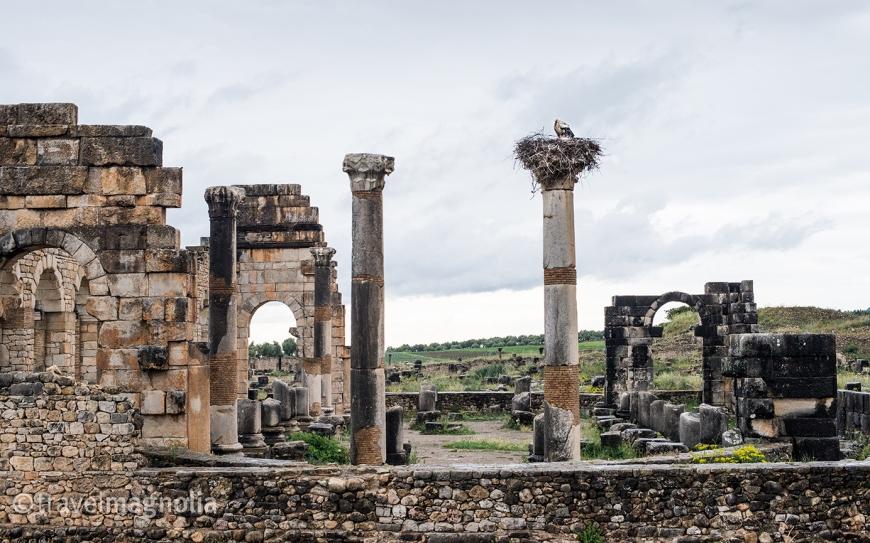 Volubilis, Roman Ruins, Morocco ©travelmagnolia2016
