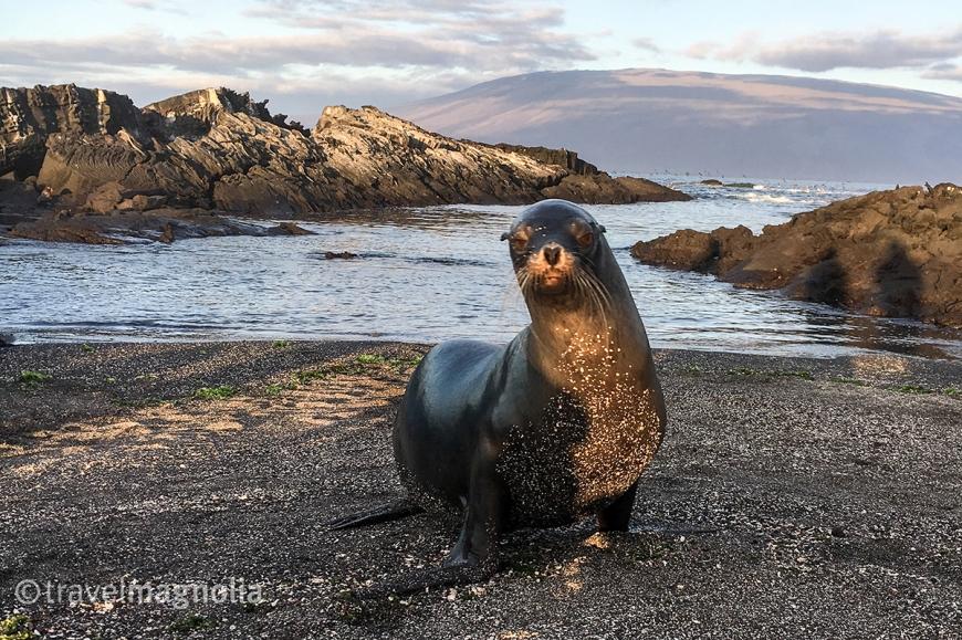 featured-fernandina-sea-lion
