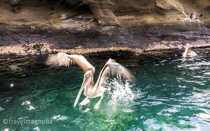 pelican-landing-2