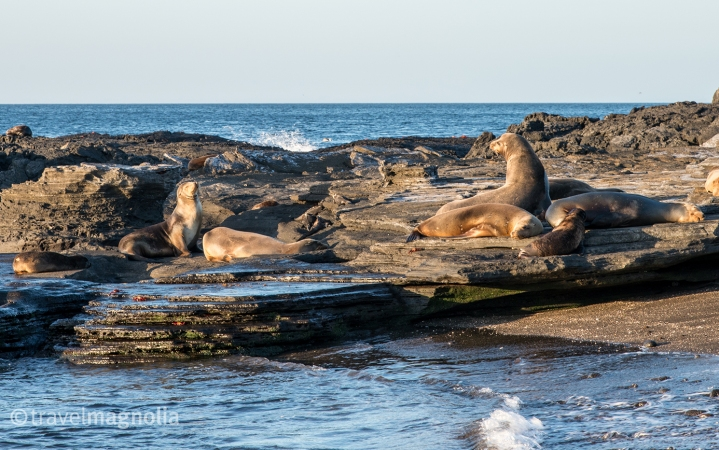 seven-sea-lions-sunning-on-the-shore