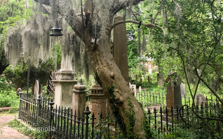 Charleston Graveyard Featured