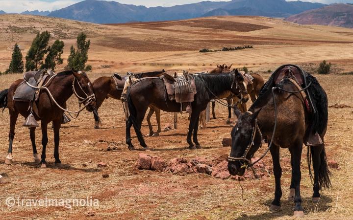 Paso Ponies