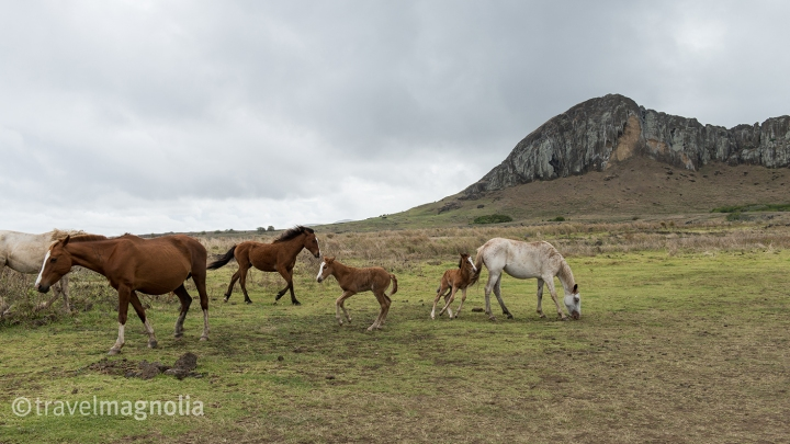 Wild Horses at the Crater