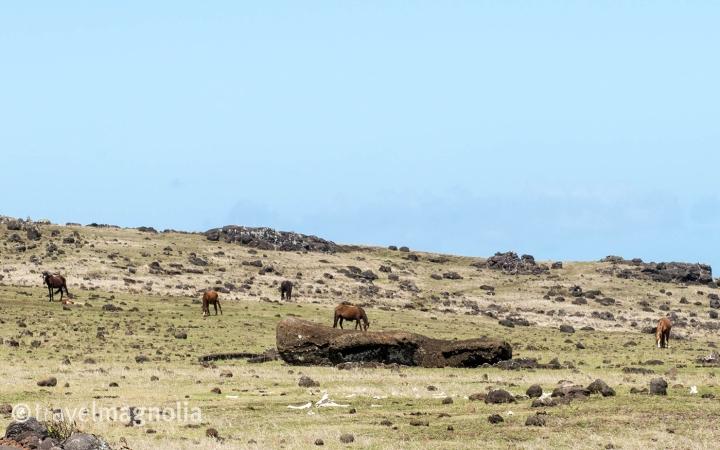 Ahu Akahanga horses and Moai