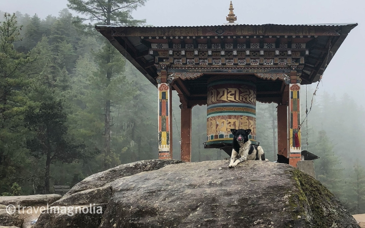 ParoTaktsang_Dog and Prayer Wheel.jpg